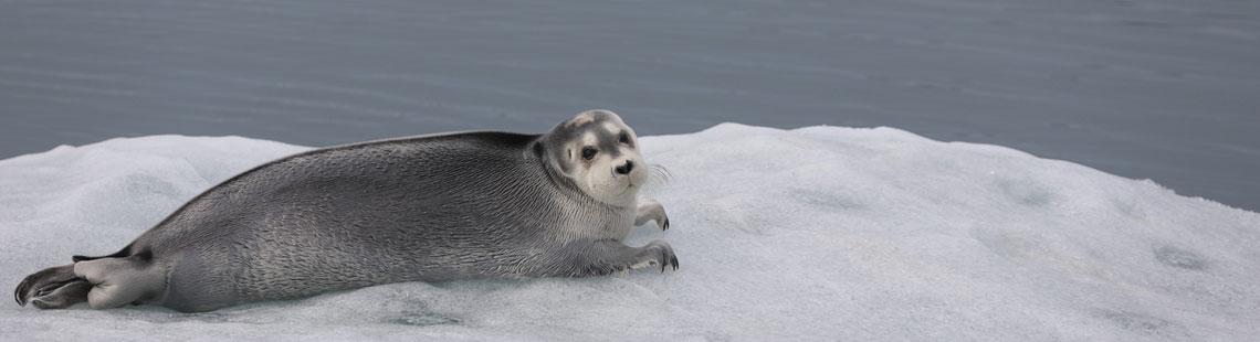 Logbuch Spitzbergen West