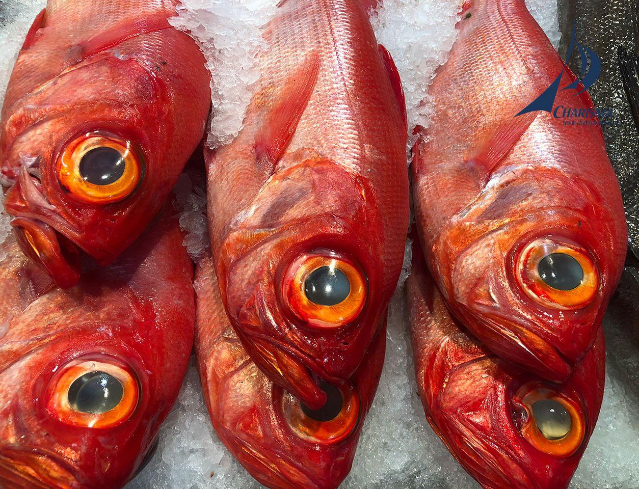 Fischauslage beim Frischemarkt