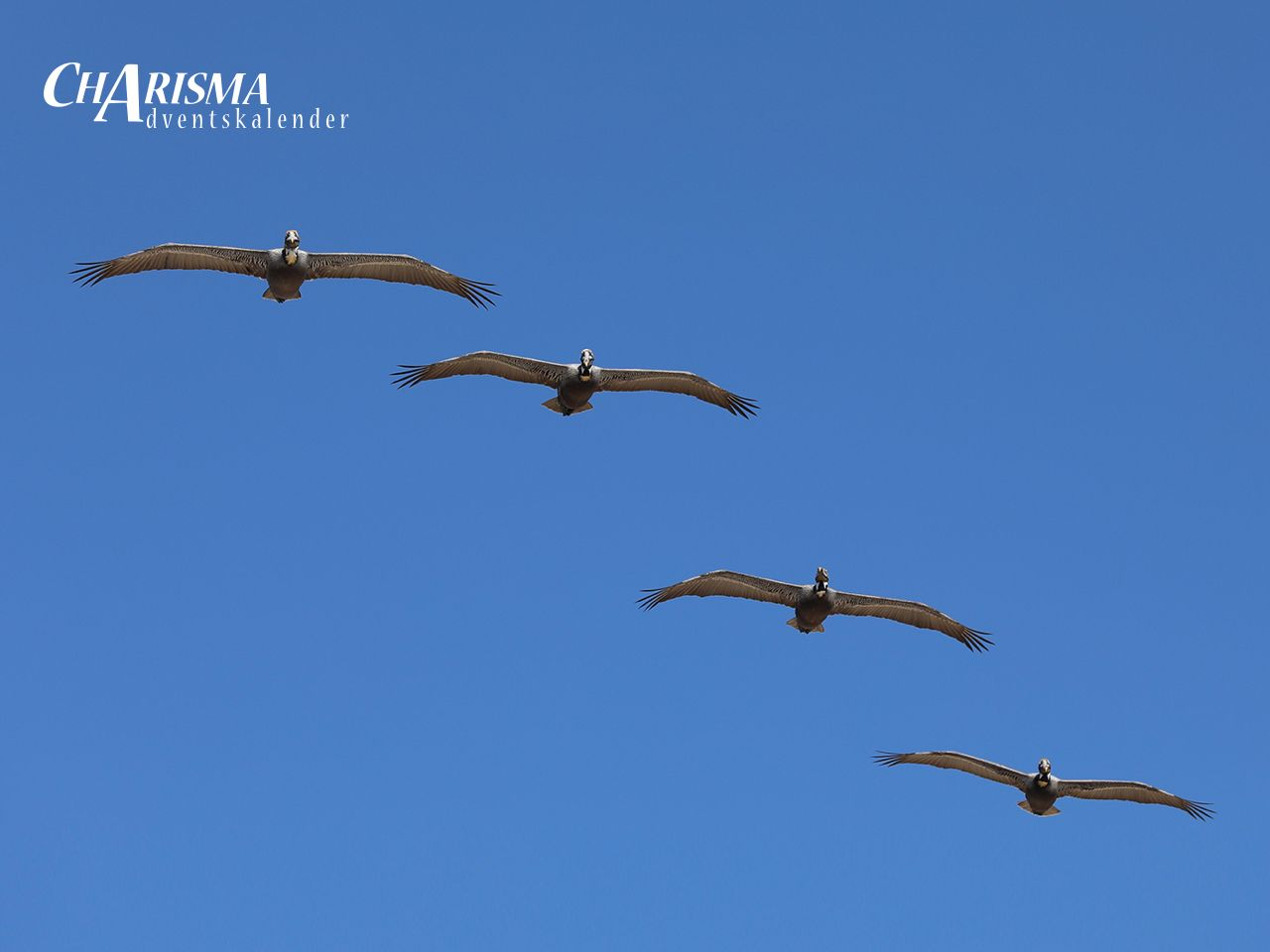 Vier Pelikane im Formationsflug